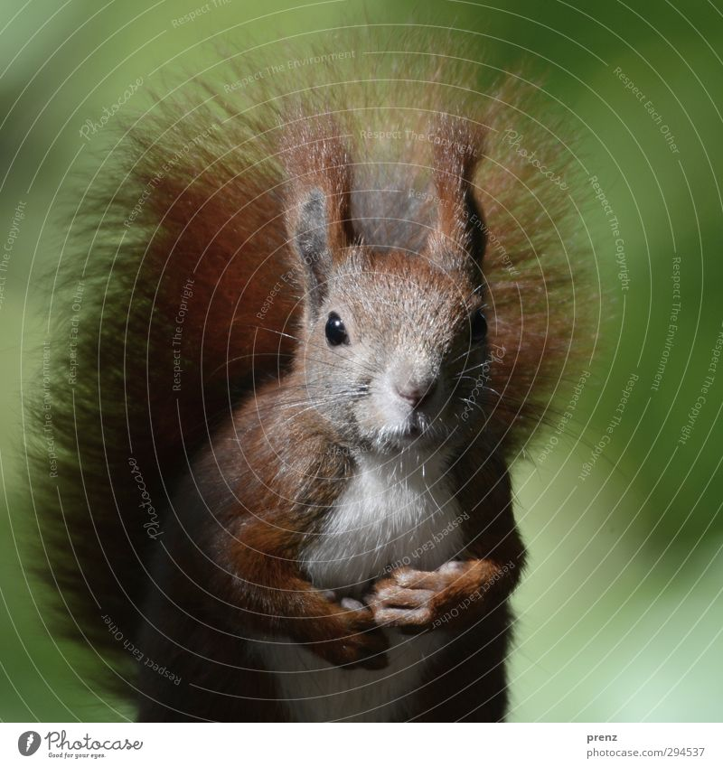 Nature Green Animal Environment Brown Wild animal Beautiful weather Cute Squirrel Rodent