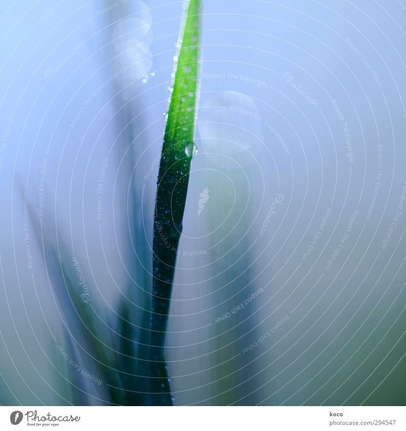 In the morning Nature Plant Drops of water Sky Sunlight Spring Summer Grass Leaf Water Line Growth Esthetic Thin Simple Fresh Cheap Wet Natural Positive Clean