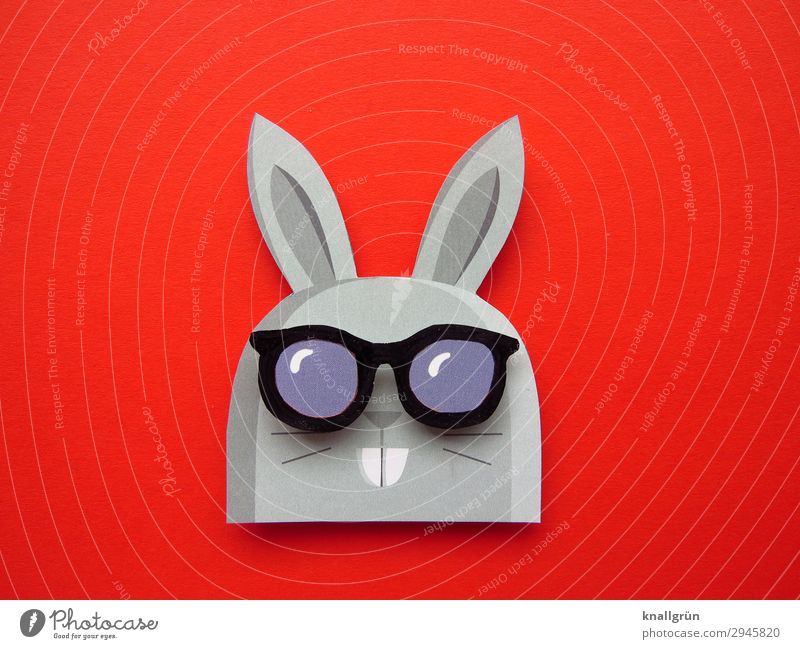 father of rabbit Animal Hare & Rabbit & Bunny 1 Sunglasses Funny Cute Gray Red Black Emotions Joy Creativity Hare ears Buck teeth Colour photo Studio shot