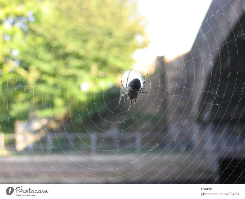 Spiderman Summer spiderweb Bridge Sewer Nature