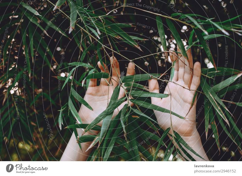 hands reaching towards bamboo branches Woman Nature Summer Plant Green Hand Tree Forest Background picture Garden Fingers Seasons Agriculture Bamboo Reach