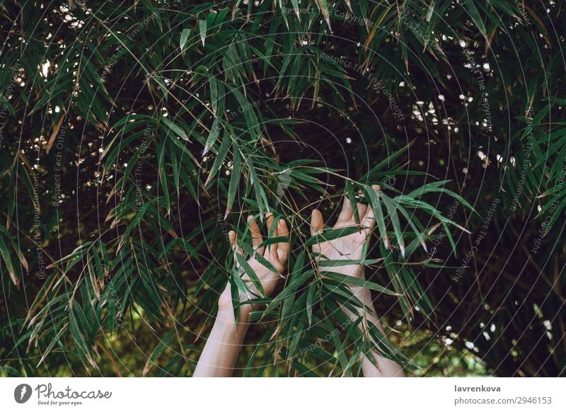 hands reaching towards bamboo branches Background picture Bamboo Fingers Forest Garden Green Hand Nature Exterior shot Plant Reach Seasons Summer Tree Woman