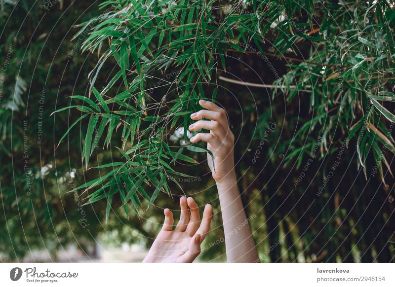 hands reaching towards bamboo branches Reach Fingers Forest Bamboo Woman Seasons Tree Exterior shot Summer Garden Background picture Hand Plant Green Nature