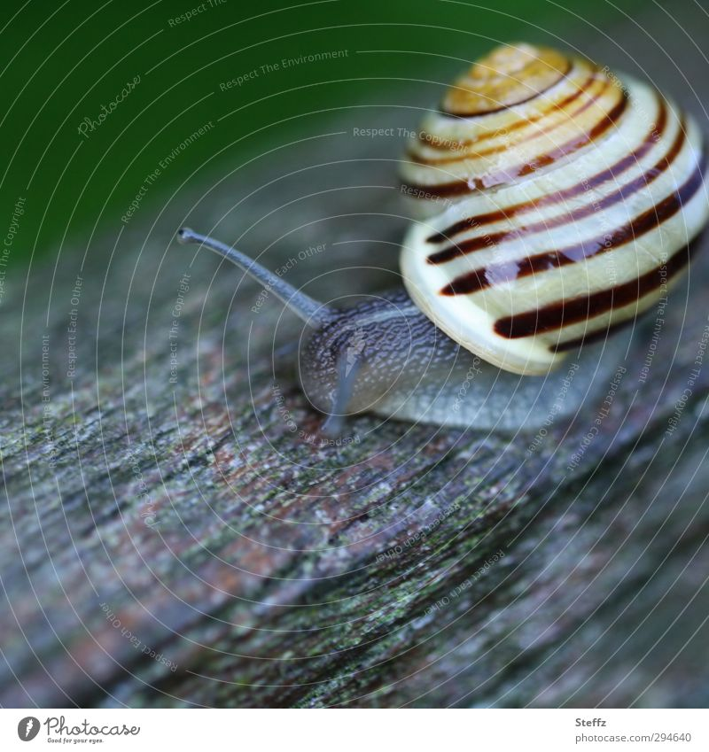 at snail's pace Crumpet Snail shell Slowly In transit Forwards sluggishness Wood creep Creeping snail creeping Small Slow motion Near Round Gray Striped Spiral