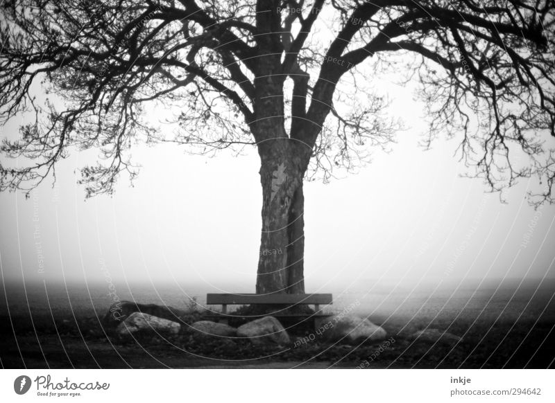 Nature Old Tree Loneliness Calm Winter Environment Dark Cold Autumn Emotions Moody Field Fog Idyll Bench