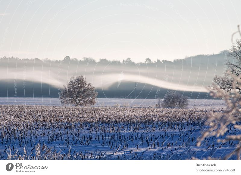 winter breeze Environment Nature Landscape Elements Earth Sky Sunrise Sunset Sunlight Winter Weather Beautiful weather Fog Ice Frost Snow Tree Corn stubble