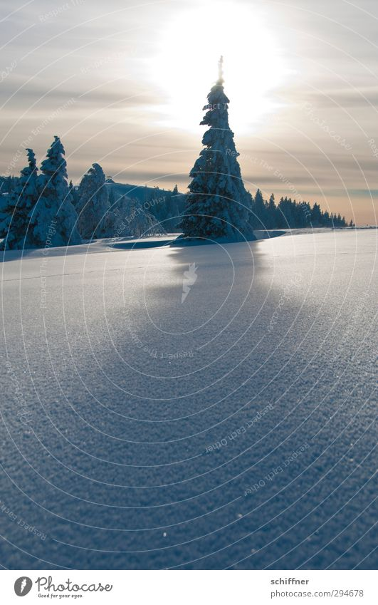 Nature Plant Sun Tree Landscape Winter Environment Mountain Snow Exceptional Ice Beautiful weather Point Frost Peak Hill