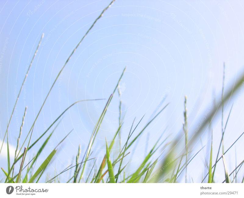 Grass whisper I Green Sky Blue