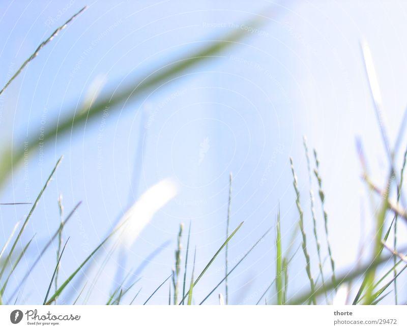 Grass whispering II Green Sky Blue
