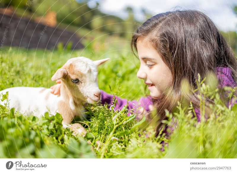 Little girl looking a goat on the grass Child Human being Vacation & Travel Nature Summer Plant Blue Beautiful Green White Landscape Flower Animal Calm Joy Girl