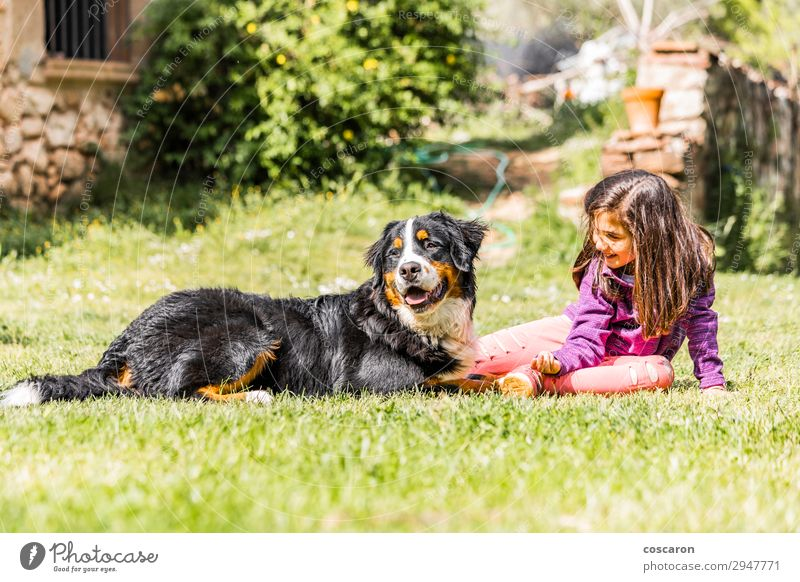 Little girl with a Bernese mountain dog Lifestyle Joy Happy Leisure and hobbies Playing Summer Mountain Garden Child Human being Feminine Toddler Girl