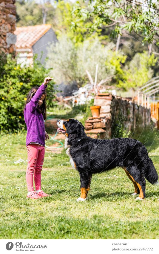 Little girl training a Bernese mountain dog Lifestyle Joy Happy Beautiful Leisure and hobbies Playing Summer Garden Education Child Teacher Apprentice Professor