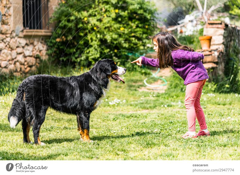 Little girl training a Bernese mountain dog Child Human being Vacation & Travel Nature Dog Summer Beautiful Green Hand Animal Joy Girl Lifestyle To talk Love