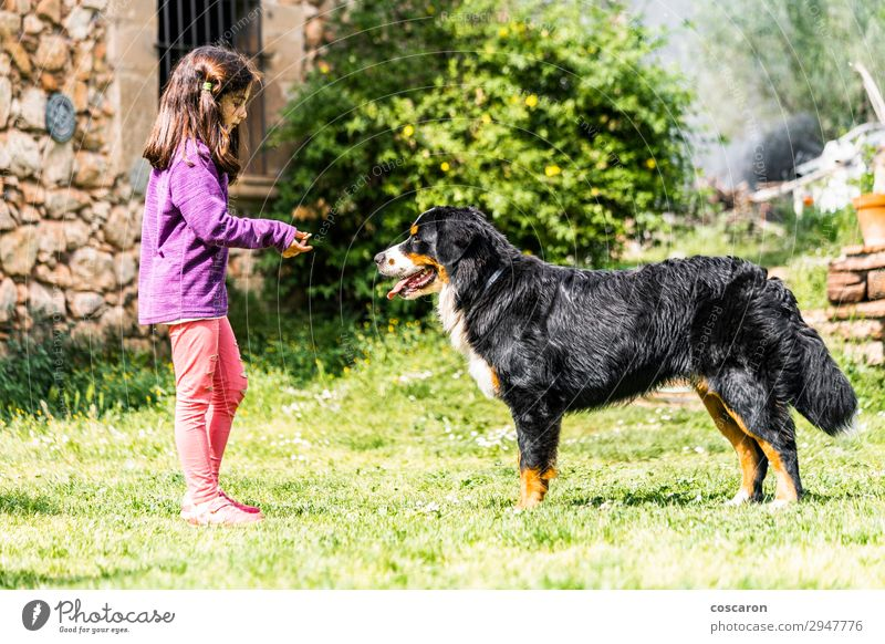 Little girl training a Bernese mountain dog Lifestyle Joy Happy Beautiful Leisure and hobbies Playing Vacation & Travel Summer Summer vacation Garden Child