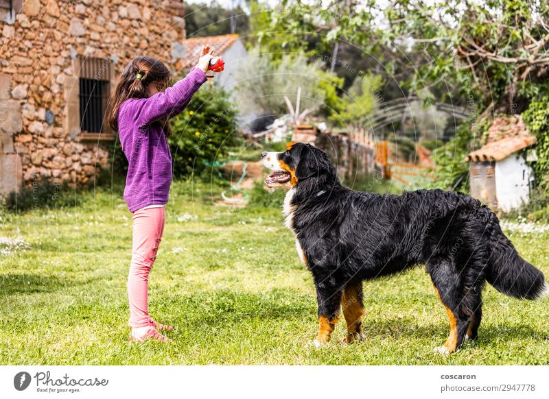 Little girl training a Bernese mountain dog Woman Child Human being Nature Dog Summer Beautiful Green Hand Flower Animal Joy Girl Lifestyle Adults Love