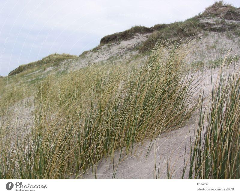 dune Beach Grass Clouds Europe Denmark Dune. Houvig Sand Sky