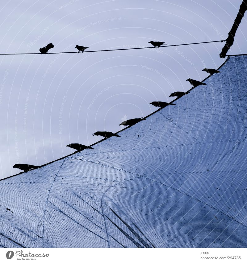 The birds Sky Spring Summer Fishing boat Sail Aviation Animal Bird Group of animals Herd Flock Line Net Network Flying Sit Esthetic Thin Blue Black Together