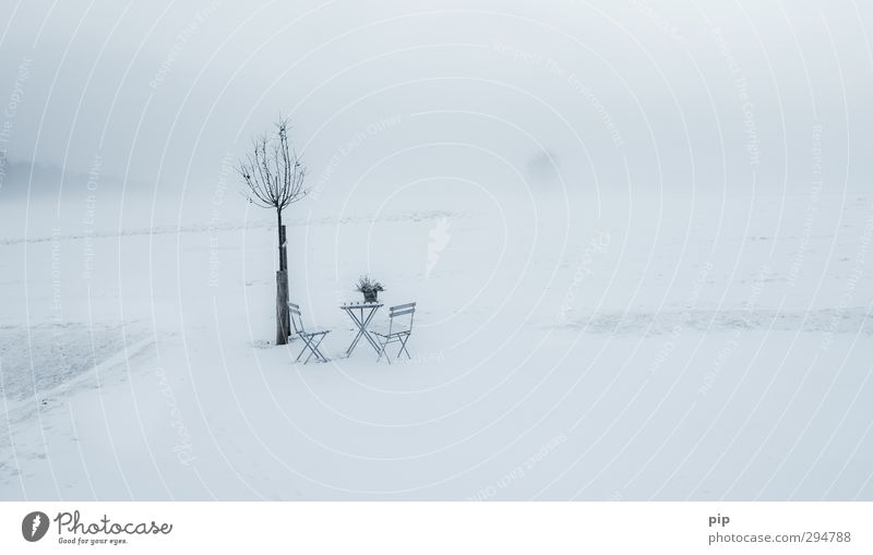 Nature Plant Loneliness Landscape Calm Winter Cold Environment Spring Meadow Snow Horizon Snowfall Fog Empty Table
