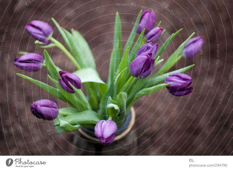 Plant Green Beautiful Summer Flower Leaf Spring Happy Garden Park Earth Birthday Esthetic Joie de vivre (Vitality) Beautiful weather Violet
