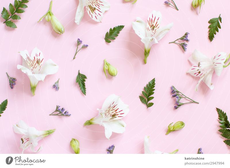 Flowers on a light pink background Woman White Adults Pink Above Design Decoration Creativity Wedding Mother Conceptual design Valentine's Day Mother's Day