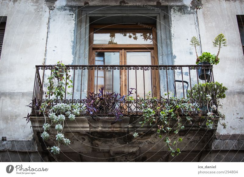 Vacation & Travel City Summer Plant House (Residential Structure) Wall (building) Architecture Wall (barrier) Building Facade Flat (apartment) Lifestyle Living or residing Tourism European Moving (to change residence)