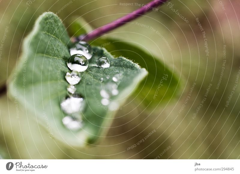 Dewdrop II Nature Plant Water Drops of water Summer Bad weather Leaf Foliage plant Wild plant Alps Fluid Fresh Healthy Good Near Wet Green