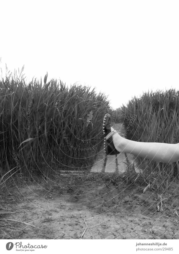 curious Crazy Footwear Woman Legs Nature Black & white photo Funny Feet