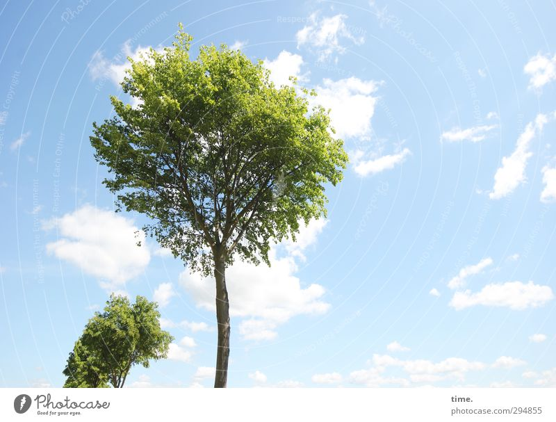 Sky Nature Plant Tree Clouds Spring Freedom Healthy Bright Time Air Climate Fresh Beautiful weather Happiness Beginning