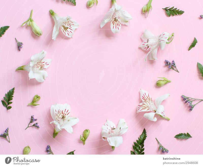Flowers on a light pink background Design Decoration Wedding Woman Adults Mother Above Pink White Creativity romantic pastel flat lay alstromeria