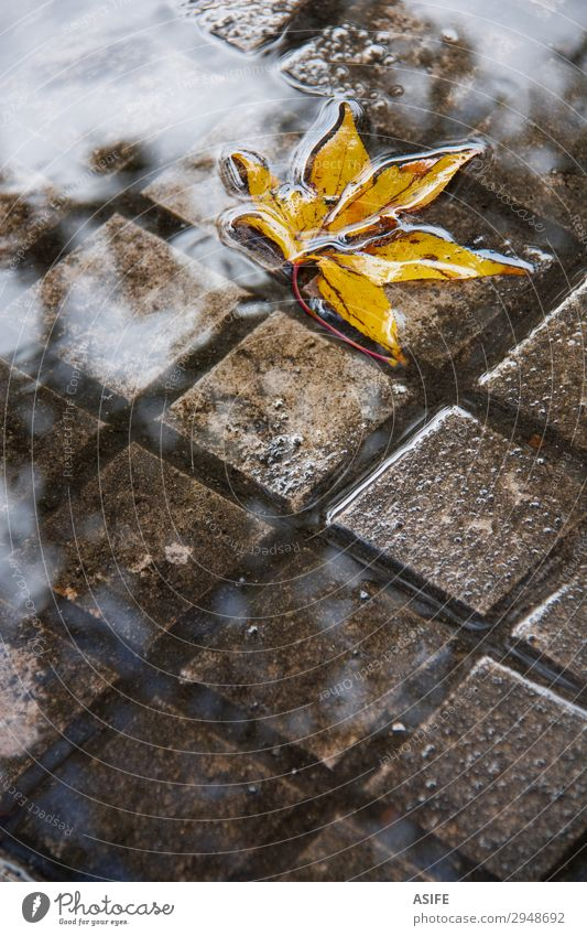 Yellow leaf in a puddle Clouds Autumn Rain Leaf Wet City fall Floating Puddle Rainwater slabs submerged sidewalk grid sunk Deserted Reflection