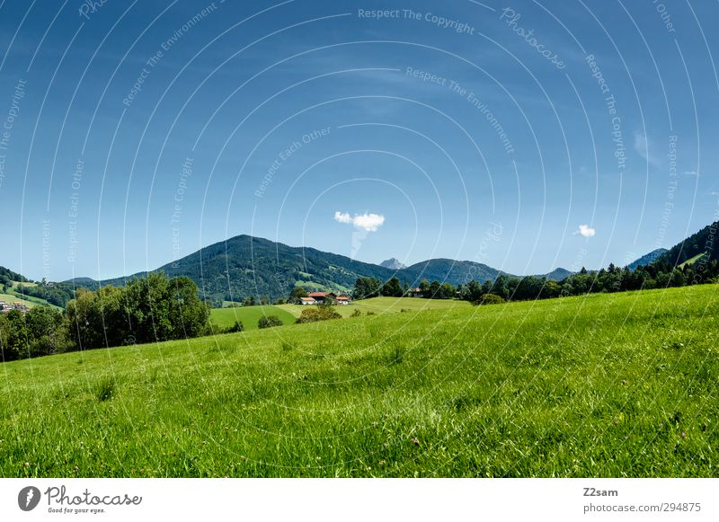 Where's Heidi? Environment Nature Landscape Cloudless sky Summer Beautiful weather Bushes Meadow Hill Alps Mountain Fresh Sustainability Loneliness Relaxation