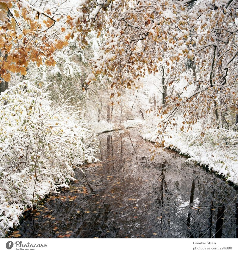 Nature Plant Tree Environment Cold Snow Moody Exceptional Park Weather Wild Beautiful weather Bushes Many Fantastic Brook