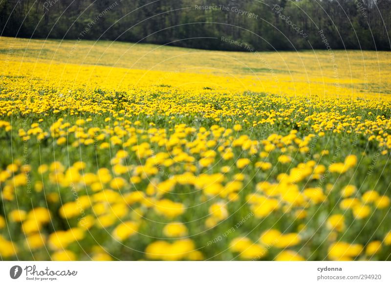 Nature Beautiful Colour Flower Landscape Calm Relaxation Forest Environment Yellow Far-off places Meadow Life Grass Spring Freedom