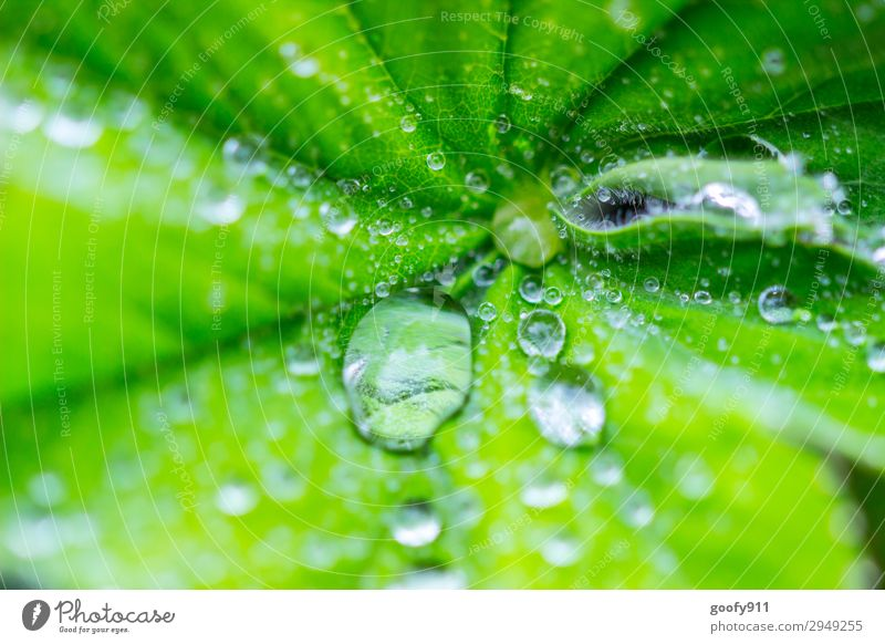 water pearls Trip Summer Environment Nature Landscape Plant Animal Water Drops of water Spring Autumn Bad weather Leaf Foliage plant Garden Park Meadow Elegant