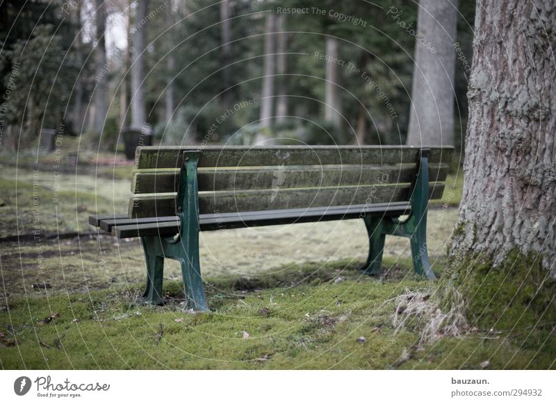 sitting. waiting. wishing. Far-off places Funeral service Retirement Nature Landscape Weather Tree Grass Moss Park Meadow Deserted Places Wood Metal Old Observe