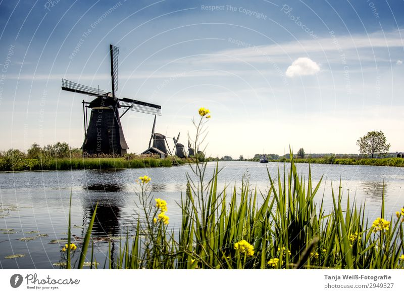 Windmill in Holland Landscape Water Sky Sunlight Spring River bank Deserted Calm Colour photo Exterior shot Copy Space top Day Central perspective