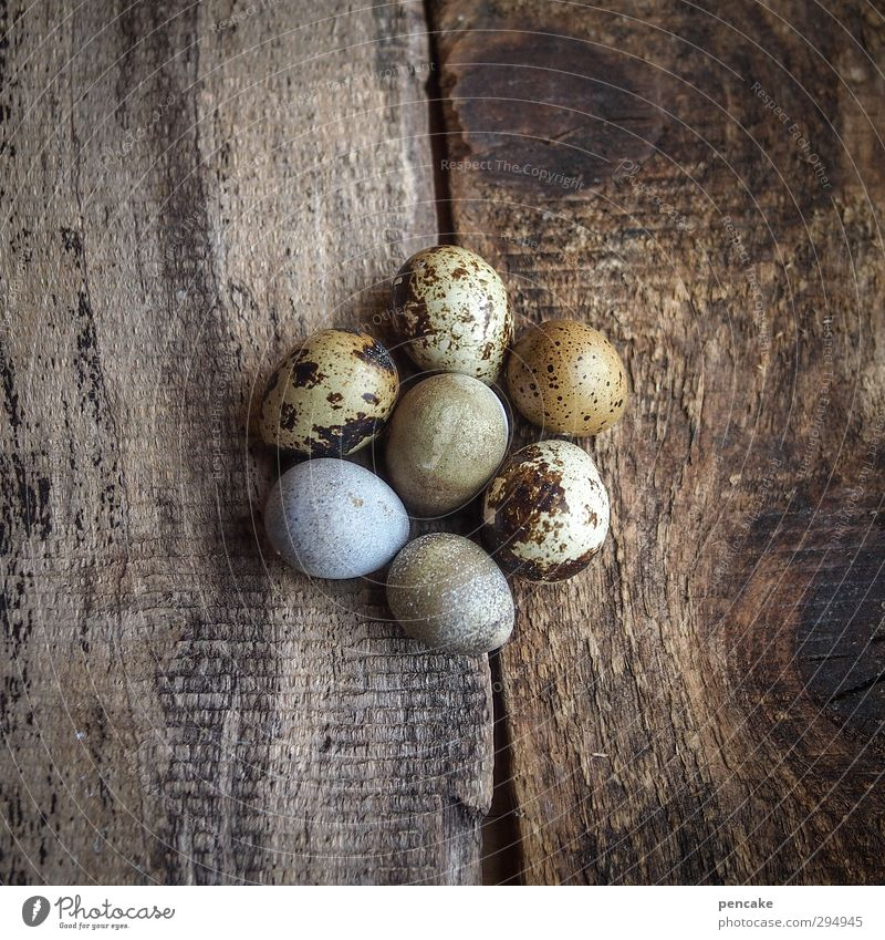 lucky number Organic produce Nature Animal Elements Earth Spring Wood Sign Optimism Success Power Safety (feeling of) Agreed Beautiful Life Egg Quail's egg 7