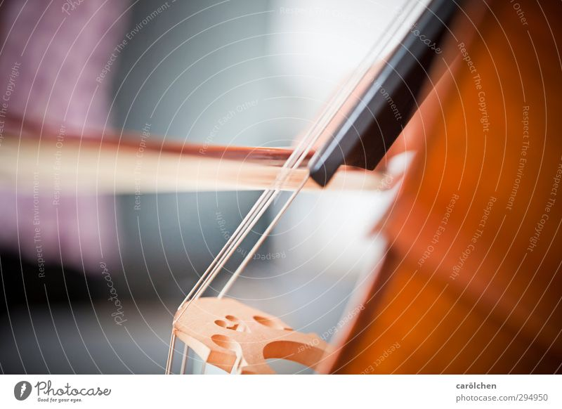 music Music Playing Cello Double bass String instrument Arch Musical instrument string Make music music school Music tuition Colour photo Interior shot Detail