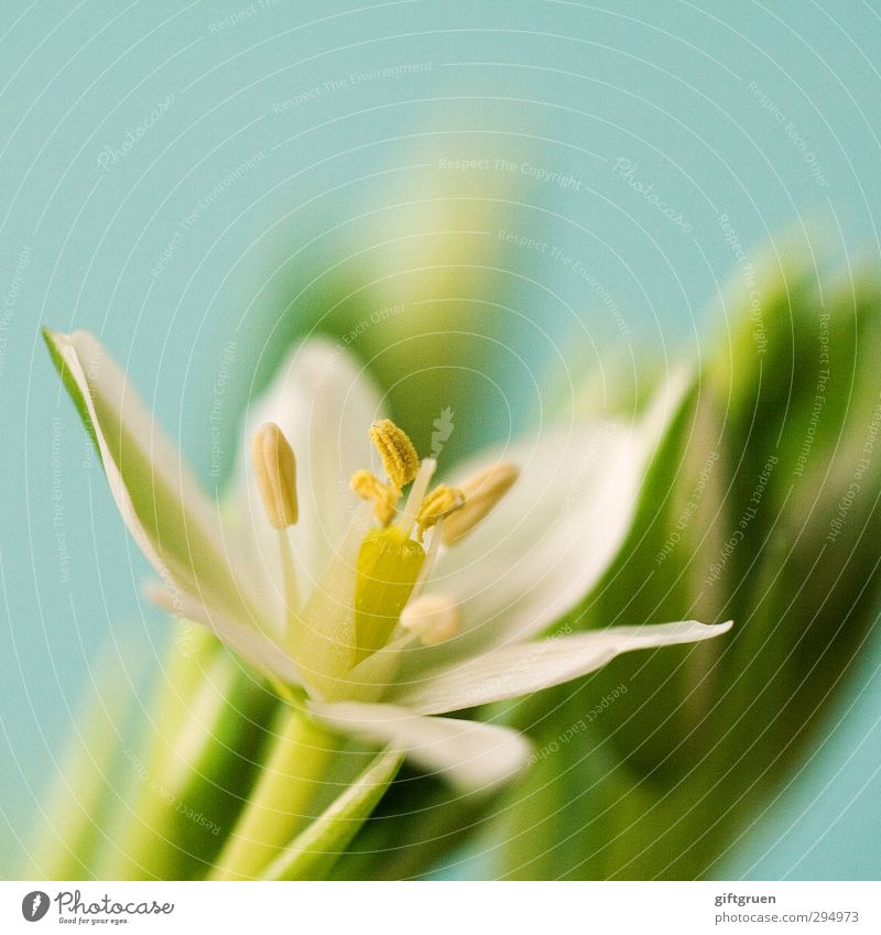 Nature Green White Plant Flower Leaf Environment Spring Blossom Growth Blossoming Bud Blossom leave Pistil Pollen Graceful