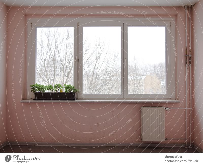 Plant Green Colour White House (Residential Structure) Window Wall (building) Architecture Interior design Snow Wall (barrier) Moody Pink Snowfall Design