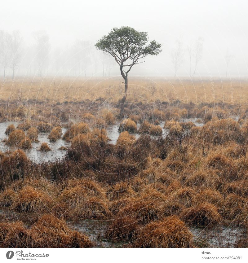 Sky Nature Water Tree Loneliness Landscape Environment Far-off places Grass Time Earth Climate Fog Elegant Contentment Idyll
