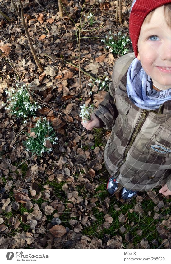 Snowdrops and blue eyes Human being Child Toddler Infancy 1 3 - 8 years Spring Plant Flower Blossom Friendship Bouquet Spring flowering plant Spring day Donate