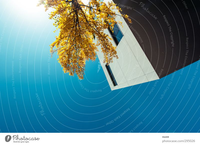 Sky Blue City Tree House (Residential Structure) Environment Yellow Window Autumn Architecture Building Business Work and employment Facade Tall Modern