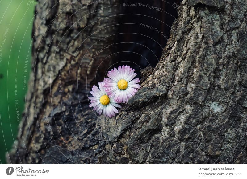 daisy flower plant on the trunk in the nature Daisy Family Flower White Blossom leave Plant Garden Floral Nature Decoration Romance Beauty Photography Fragile
