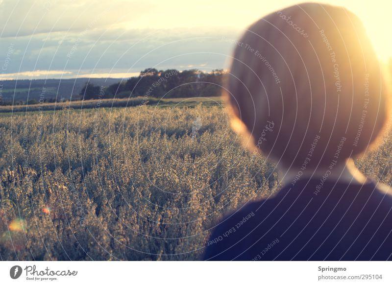 outlook Calm Nature Sun Sunrise Sunset Sunlight Summer Grain field Field Discover Relaxation Friendliness Infinity Yellow Gold Joie de vivre (Vitality)