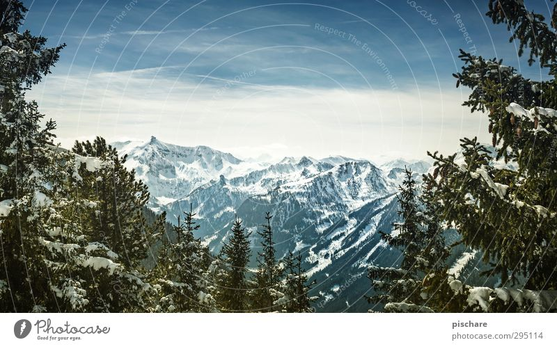 the really last winter picture Nature Landscape Sky Winter Beautiful weather Snow Tree Mountain Snowcapped peak Cold Adventure Colour photo Exterior shot Day