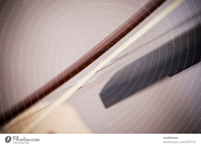 music Music Brown String instrument Arch Musical instrument string Cello bow Double bass Colour photo Subdued colour Detail Macro (Extreme close-up)