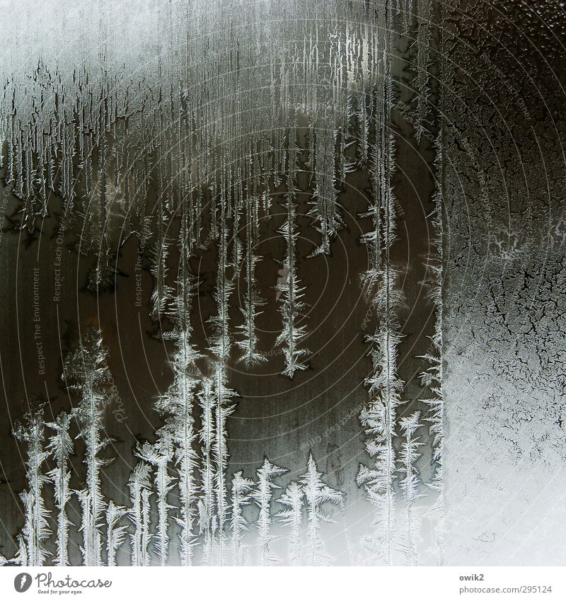 Venetian blind Environment Nature Ice Frost Freeze Illuminate Authentic Sharp-edged Fantastic Fresh Cold Near Natural Point Crazy Bizarre Frostwork Glass