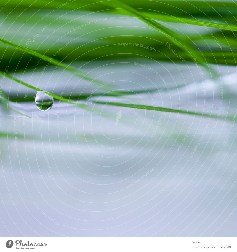 Nature Blue Green Beautiful Water Summer Plant Leaf Cold Life Grass Spring Sadness Natural Dream Line
