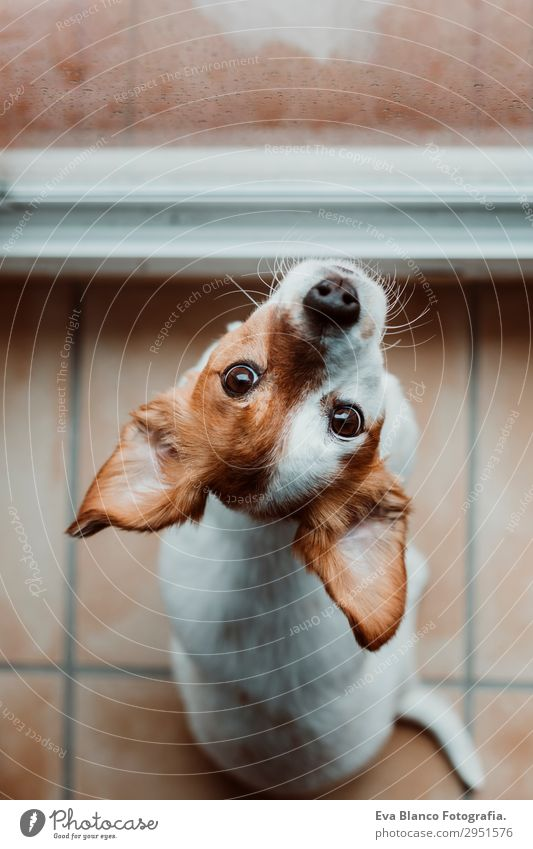 cute small dog sitting by the window. Rainy day Dog Beautiful House (Residential Structure) Clouds Animal Loneliness Winter Window Lifestyle Autumn Spring